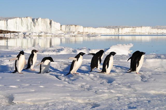 Google Pingüino: Entendiendo los cambios